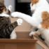 кот в коробке с другим