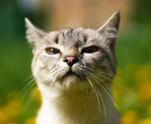 кот с мордой