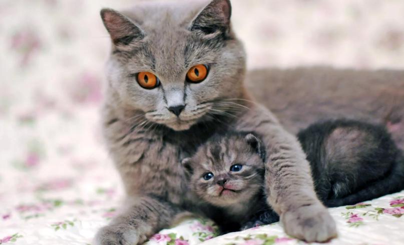 кошка и котята