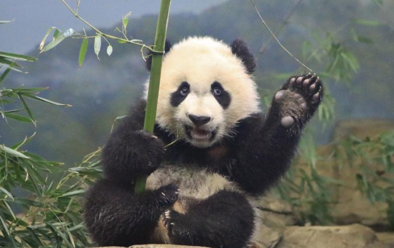 Photo of Приколы с животными — забавные панды | new crazy animals 45