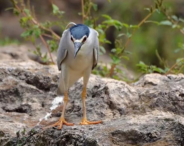 птица смешная