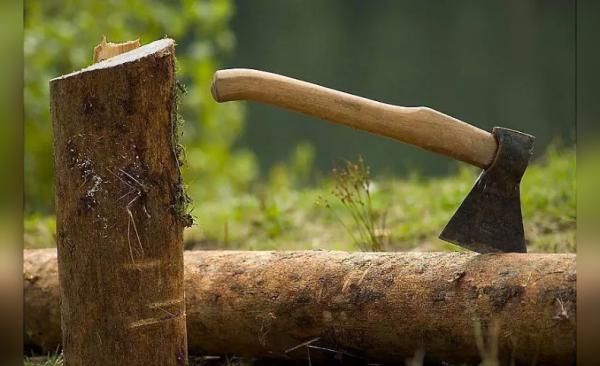 Photo of В Башкирии мужчину осудили за незаконную рубку деревьев