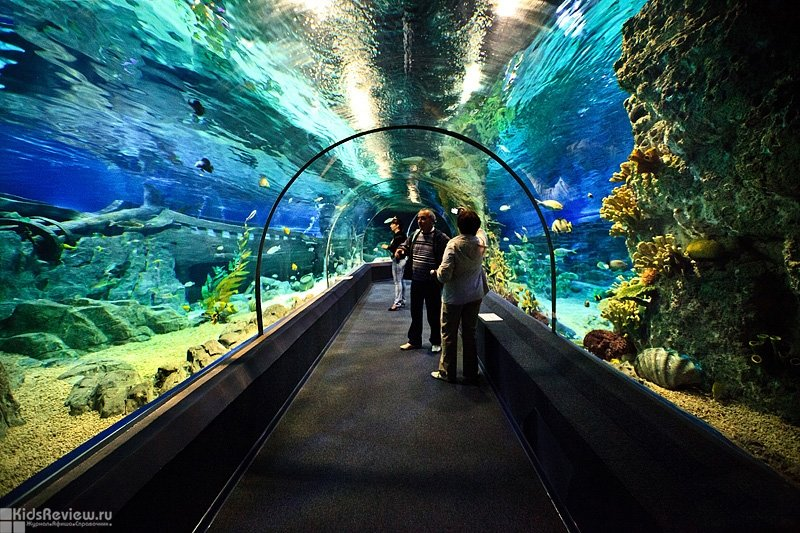 sochi-discovery-world-aquarium-alexandra-dodina.ru__0