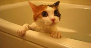 Котенок в ванне боится