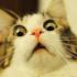 Кот глюканул что это
