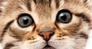 котенок морда