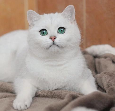 кот белый и смешной