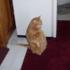 кот на коврике толстый