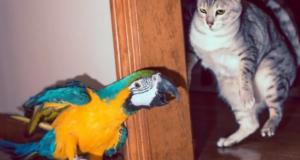 кот с попугаем