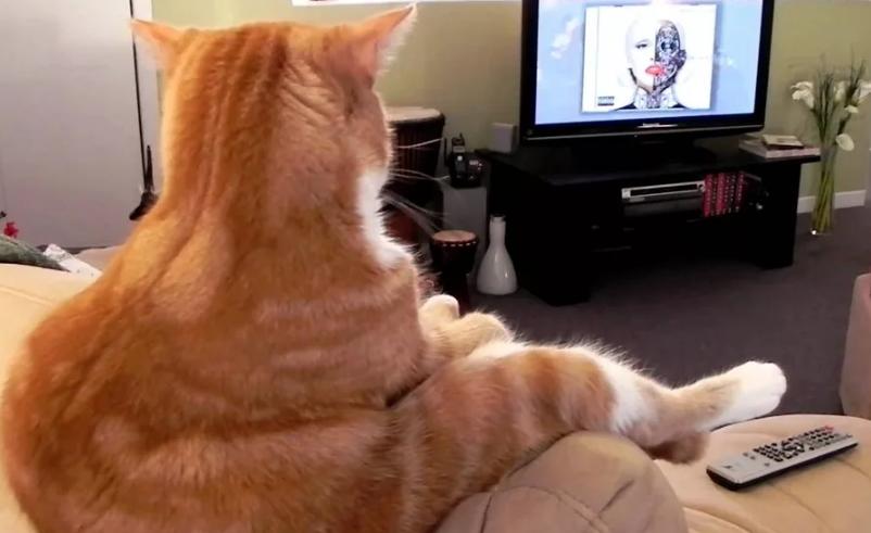 Photo of Котики — забавные создания, 7 смешных фото с комментариями