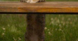 ну и что котик