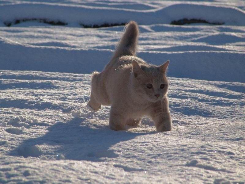 Кот красавец)