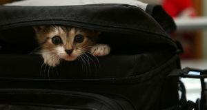 кошка в ящике