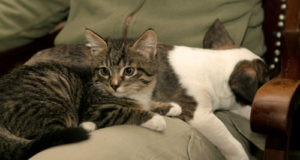 И кто сказал что кошки собаками не дружат?