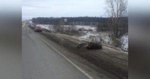 В Башкирии водитель насмерть сбил выбежавшего на дорогу лося
