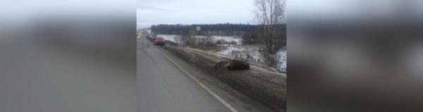 Photo of В Башкирии водитель насмерть сбил выбежавшего на дорогу лося