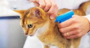 С 2019 года в Башкирии начнут чипировать домашних животных