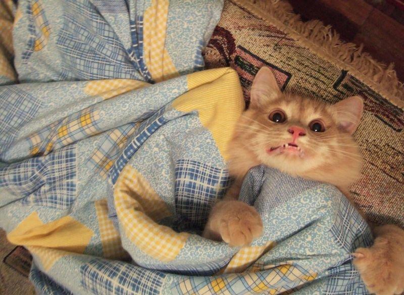 Ах как же хорошо спать в постельке)))