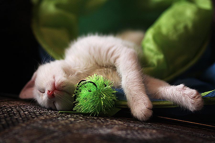 Так устал за целый день, что уснул вместе с игрушкой)