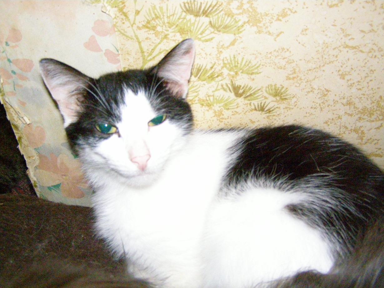 Кошка Мурка только что проснулась)))