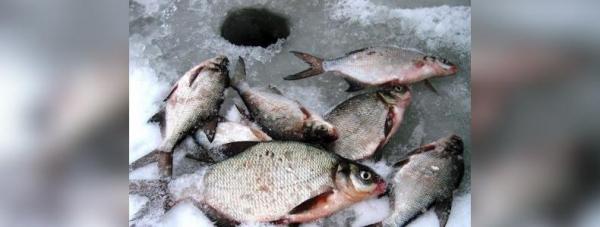 Photo of В Стерлитамакском районе Башкирии полицейские прервали рыбалку браконьера