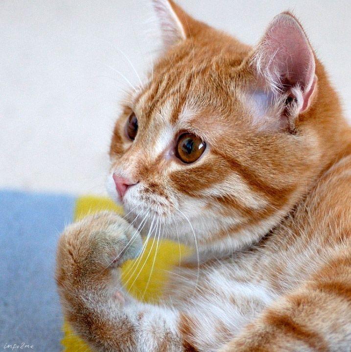холостяк кот