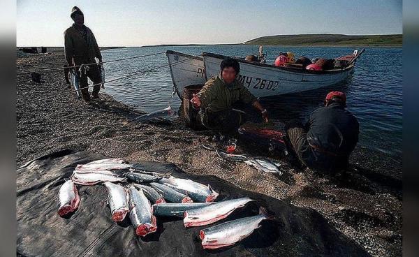 Photo of В Башкирии заведено 111 уголовных дел на рыбаков