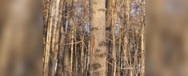 Photo of Из Башкирии пытались вывезти незаконно вырубленные деревья на миллион рублей