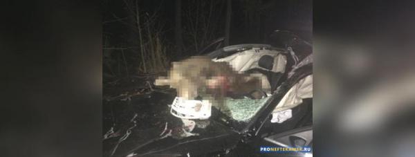 Photo of На трассе Дюртюли-Нефтекамск автомобиль сбил лося, два человека пострадали