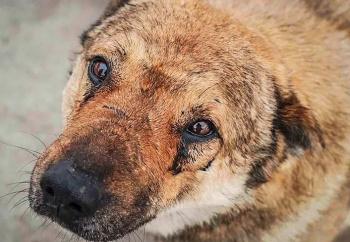 Photo of Жительница Стерлитамака напомнила мэру о законе, запрещающем умерщвление животных