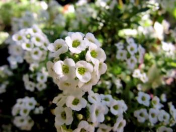 В Стерлитамаке высадили 220 тысяч цветов0