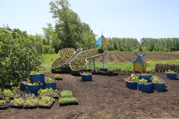 Клумбы Стерлитамака украсят более 90 тысяч цветов, выращенных в женской колонии-поселении9