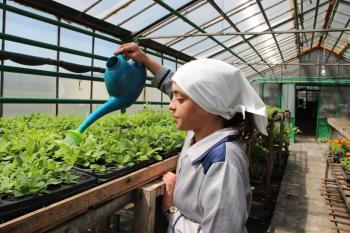 Клумбы Стерлитамака украсят более 90 тысяч цветов, выращенных в женской колонии-поселении0
