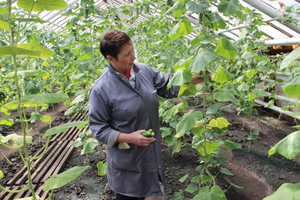 Клумбы Стерлитамака украсят более 90 тысяч цветов, выращенных в женской колонии-поселении7