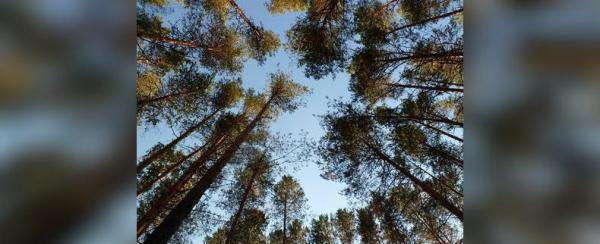 Photo of В Башкирии лесные пожары уничтожили почти 2 тысячи гектаров леса