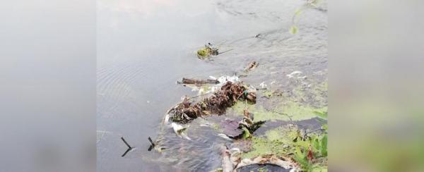 Photo of В реке Башкирии массово гибнет рыба