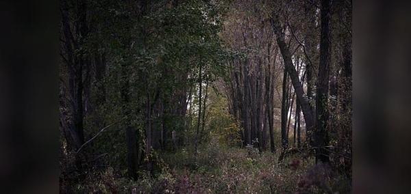 Photo of К 2024 году в Башкирии площадь лесовосстановления увеличится до 15,2 тысячи гектаров — новости Агидели