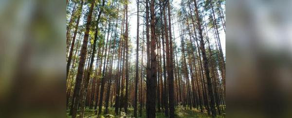 В Башкирии нашли заблудившегося ночью в лесу мужчину0