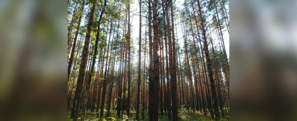 Photo of В Башкирии нашли заблудившегося ночью в лесу мужчину