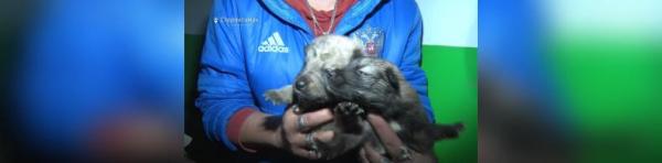 Photo of Глава Стерлитамака пообещал горожанам не спустить на тормозах инцидент с жестоким убийством щенков