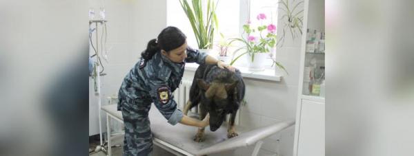 Собака-полицейский: Как живут и работают хвостатые стражи порядка в Башкирии27
