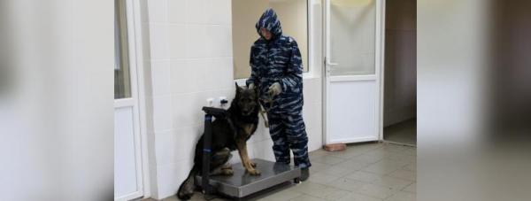 Собака-полицейский: Как живут и работают хвостатые стражи порядка в Башкирии29