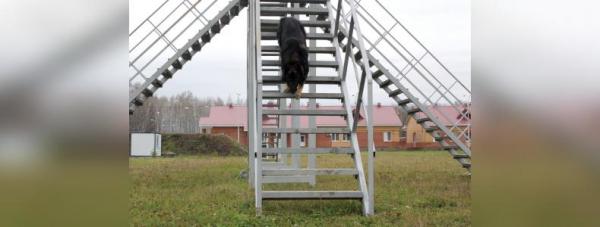 Собака-полицейский: Как живут и работают хвостатые стражи порядка в Башкирии36