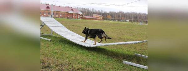 Собака-полицейский: Как живут и работают хвостатые стражи порядка в Башкирии42