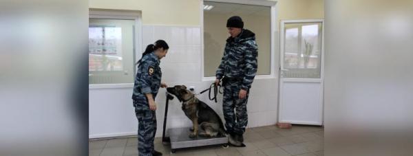 Собака-полицейский: Как живут и работают хвостатые стражи порядка в Башкирии30
