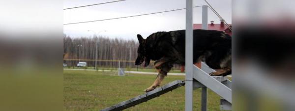 Собака-полицейский: Как живут и работают хвостатые стражи порядка в Башкирии41