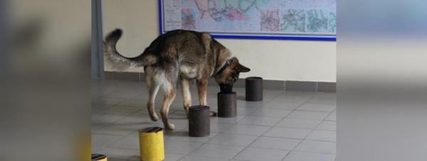 Собака-полицейский: Как живут и работают хвостатые стражи порядка в Башкирии8