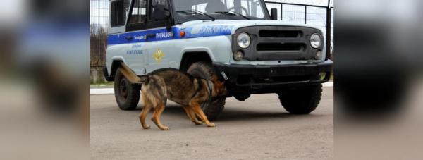 Собака-полицейский: Как живут и работают хвостатые стражи порядка в Башкирии21