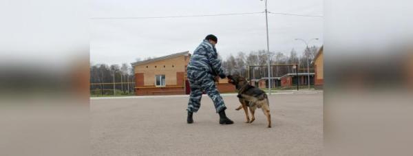 Собака-полицейский: Как живут и работают хвостатые стражи порядка в Башкирии13