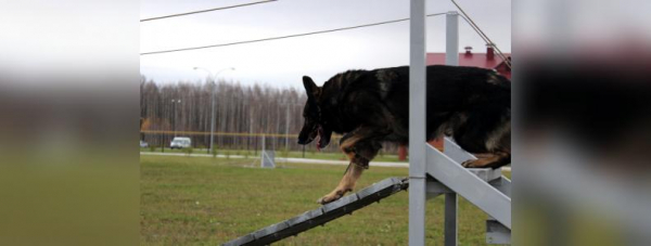 Собака-полицейский: Как живут и работают хвостатые стражи порядка в Башкирии37